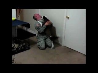 Как собаки встречают хозяев из армии